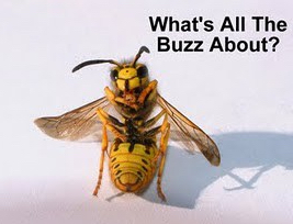 Funny Bee images1